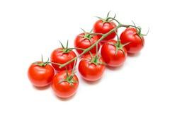Frische Tomaten auf dem Stiel lizenzfreie stockfotografie