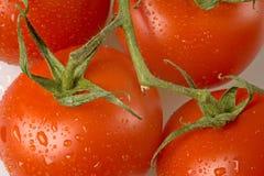 Frische Tomaten auf der Rebe Stockfotografie