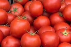 Frische Tomaten auf Landwirtmarkt Lizenzfreies Stockfoto