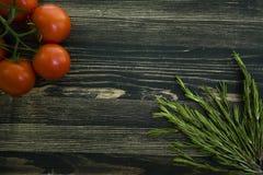Frische Tomaten auf Rosmarinniederlassung lizenzfreie stockfotos