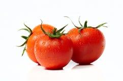 Frische Tomaten getrennt auf weißem Hintergrund lizenzfreies stockfoto