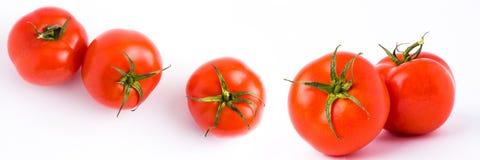 Frische Tomaten getrennt auf weißem Hintergrund Das panoramische Rot r Stockfotos