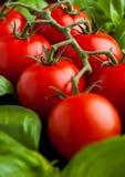 Frische Tomaten mit Basilikum auf hölzernem Brett Lizenzfreie Stockbilder