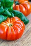 Frische Tomaten mit Basilikum für Gebrauch, wie, Bestandteile mit Kopienraum kochend Tomaten mit Basilikum auf Holztischhintergru Stockfotos