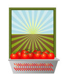 Frische Tomaten mit offenem Boden Lizenzfreies Stockfoto