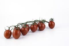 Frische Tomaten mit Tropfen des Wassers Lizenzfreie Stockbilder