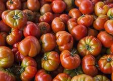 Frische Tomaten Rote Tomaten Organische Tomaten des Dorfmarktes Qualitativer Hintergrund von den Tomaten Stockfoto