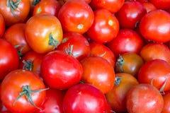 Frische Tomaten vom Bauernhof Stockfoto