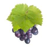 Frische Trauben und grünes Blatt Stockbilder