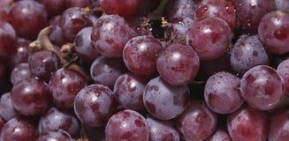 Frische Traubenfrucht Lizenzfreie Stockfotografie