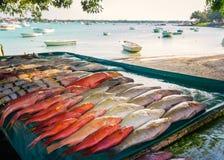 Frische tropische Fische im Freien Stockfotos