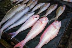Frische tropische Fische im Markt Lizenzfreie Stockfotografie