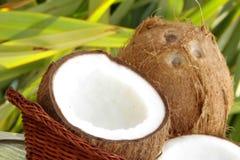 Frische tropische Kokosnüsse Stockfoto