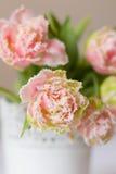 Frische Tulpen des Frühlinges Stockbilder