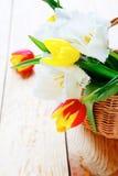 Frische Tulpen, Frühlingsblumen lizenzfreie stockbilder