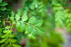 Frische und grüne Blätter Stockfoto