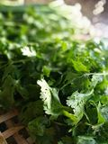 frische vegetable Lizenzfreies Stockfoto