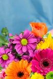 Frische vibrierende hell farbige Floristenblumen Kopieren Sie Platz Stockfoto