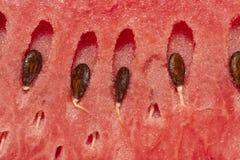 Frische Wassermelone mit Samen, Nahaufnahme zu den Samen lizenzfreie stockfotografie