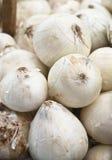 Frische weiße Zwiebeln Stockfotografie
