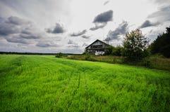 Frische Wiese des grünen Grases Lizenzfreies Stockbild