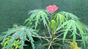 frische yodium Blume stockfotografie
