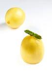 Frische Zitrone Stockbilder