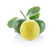 Frische Zitrone getrennt auf Weiß Lizenzfreies Stockfoto