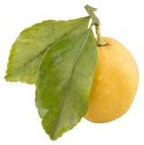 Frische Zitrone mit 2 grünen Blättern, lokalisiert Lizenzfreie Stockfotografie