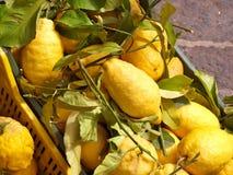 Frische Zitronen lizenzfreie stockfotos