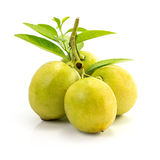 Frische Zitronen-Frucht Stockbilder