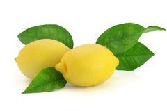Frische Zitronen mit Blättern Lizenzfreie Stockbilder