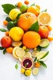 Frische Zitrusfrüchte Stockbild