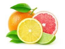 Frische Zitrusfrüchte stockbilder