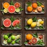 Frische Zitrusfrüchte lizenzfreies stockbild