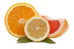 Frische Zitrusfrüchte auf einem Weiß. Stockbild
