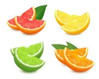 Frische Zitrusfrüchte eingestellt Orange lokalisierte Vektorillustration der Pampelmusenzitrone Kalk realistischer Vektor 3D stock abbildung