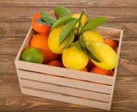 Frische Zitrusfrucht Stockfoto