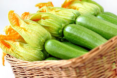Frische Zucchini Lizenzfreies Stockbild