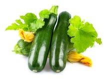 Frische Zucchini mit grünem Blatt und Blume Stockbild