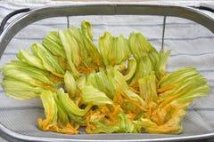 Frische Zucchiniblumen Stockfoto