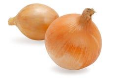 Frische Zwiebel getrennt auf Weiß Lizenzfreies Stockfoto