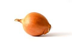 Frische Zwiebeln auf Weiß Lizenzfreie Stockbilder