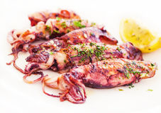 Frischer adriatischer Kalmar in buzara Soße Lizenzfreie Stockfotografie