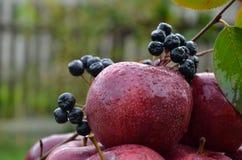 Frischer Apfel Lizenzfreies Stockfoto