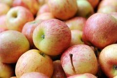 Frischer Apple Stockbilder