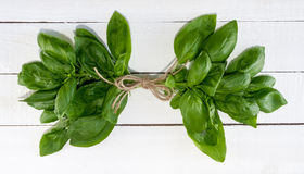 Frischer Basil Tied With Twine Stockfotos
