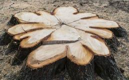 Frischer Baumstumpf Stockfoto