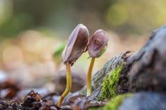 Frischer Buchenschößling im Wald, sonniger Hintergrund der Natur lizenzfreies stockfoto