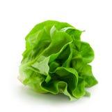 Frischer butterhead Salatkopfsalat getrennt auf Weiß Lizenzfreie Stockfotografie